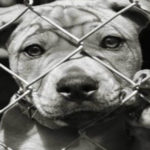 scommesse illegali e maltrattamento animali